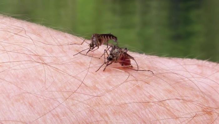 Fakta unik tentang nyamuk. Foto: thinkstock
