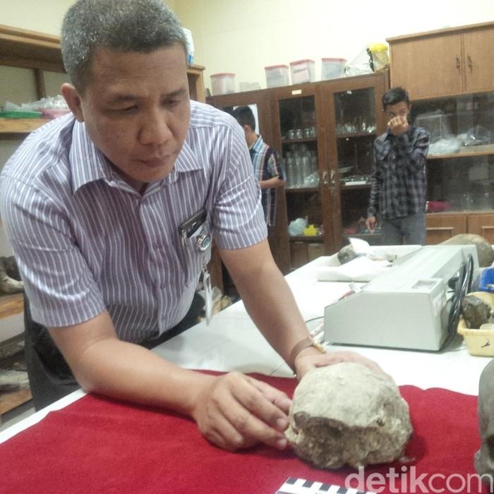 Kepala Balai Pelestarian Situs Manusia Purba, Sukronedi di Sangiran