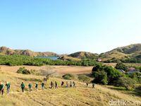 Wisatawan menjelajahi Pulau Rinca di TN Komodo (Faela Shafa/detikTravel)