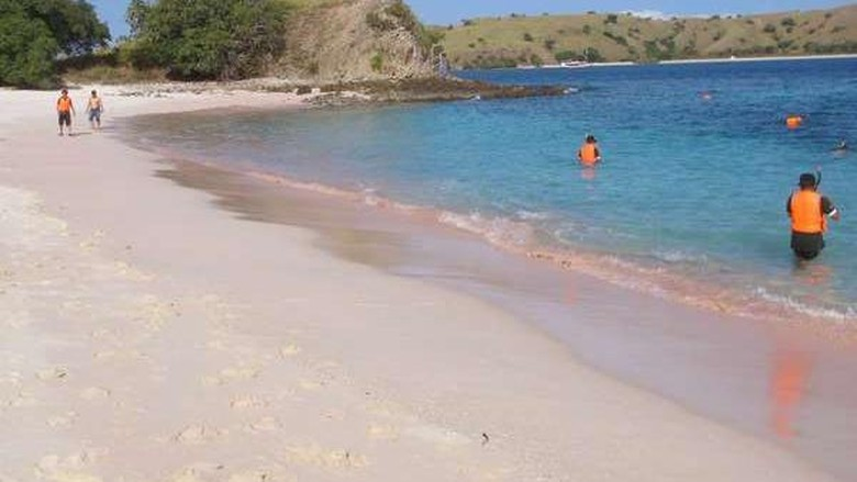 Pink Beach di Pulau Komodo (Faela Shafa/detikTravel)