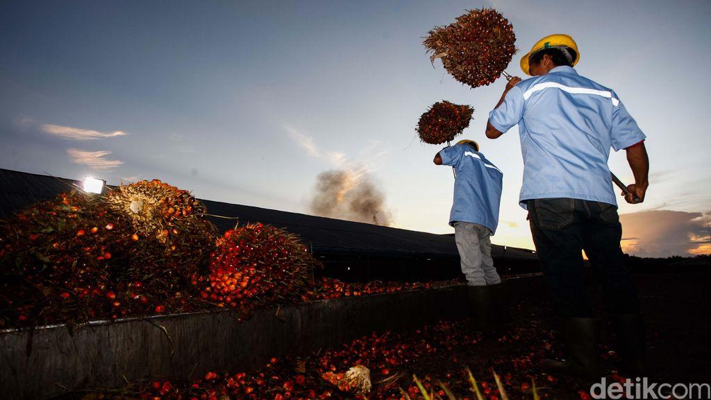 Ekspor Minyak Sawit RI Turun 4%, Ini Respons Mendag