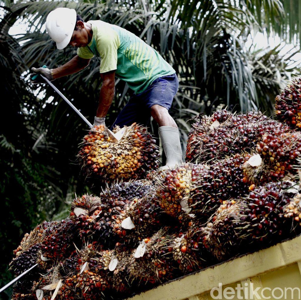 China Siap Tampung 500.000 Ton Sawit RI