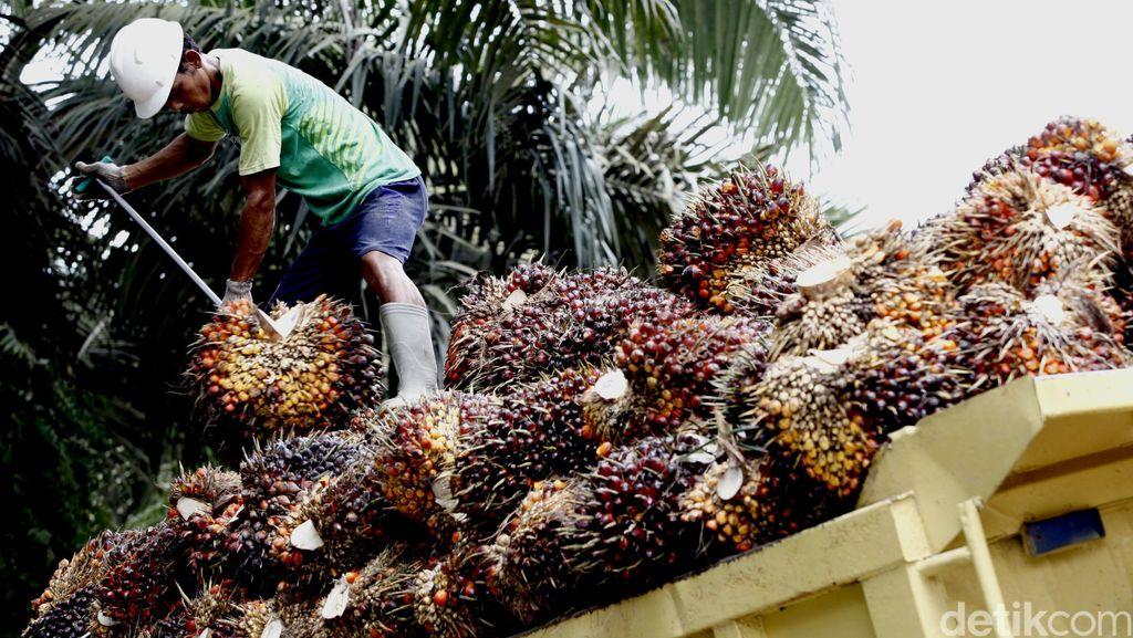 Puluhan Petani Kumpul Bahas Moratorium Kebun Kelapa Sawit