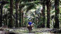 KPK Minta Pemprov Riau Tertibkan 1 Juta Hektare Kebun Sawit Ilegal