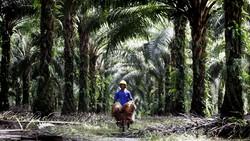 Sumatera oh Sumatera... Cepat atau Lambat Akan Tenggelam Seperti Jakarta