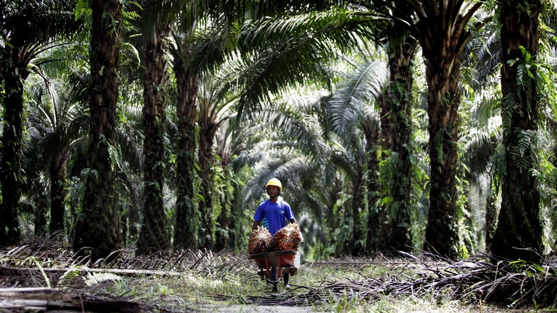 Polda Riau Tetapkan Perusahaan Sawit Tersangka Penguasaan Lahan Ilegal