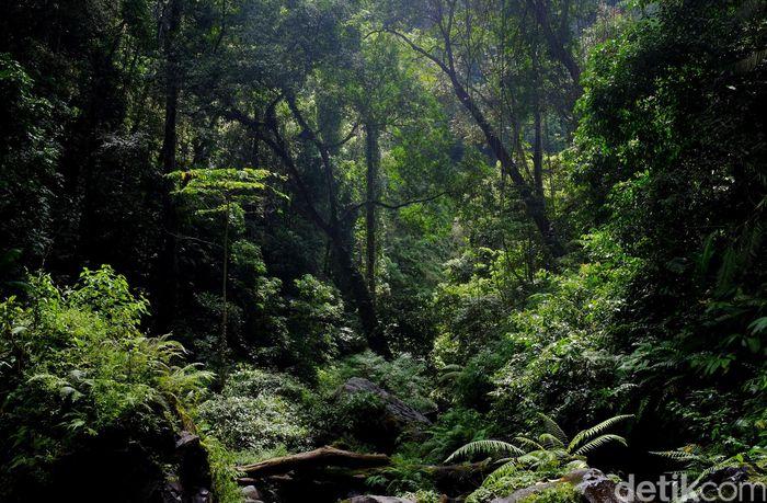 Ilustrasi Hutan Tropis/Foto: Ari Saputra