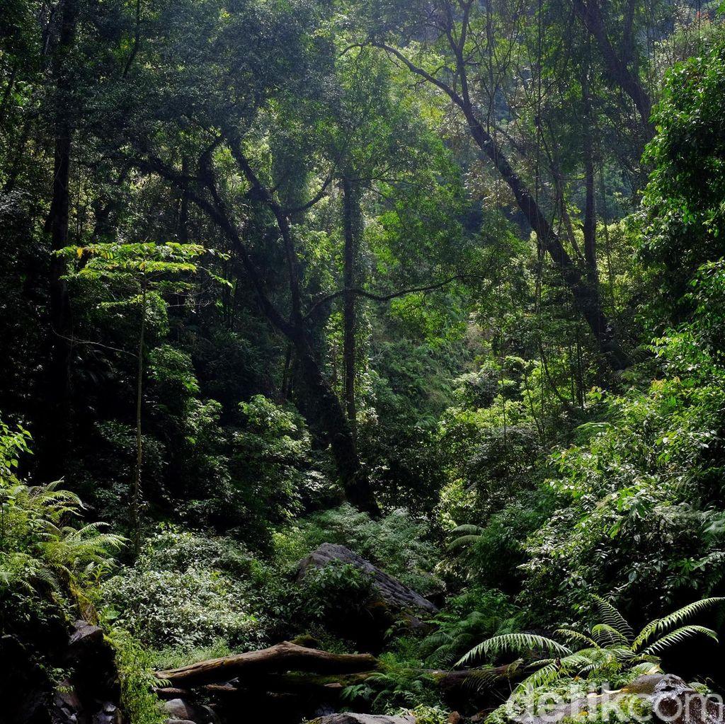 Fotostop: Pesona Hutanku