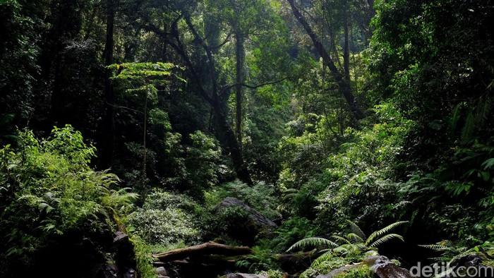 Ilustrasi foto hutan. (Foto: Ari Saputra)