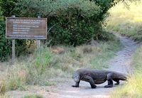 Rencana Gubernur NTT Tutup Taman Nasional Komodo Ditentang