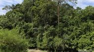 My Trip My Adventure: Sensasi Bersepeda di Hutan Pinus Garut