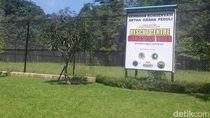 Melihat Konservasi Harimau Sumatera di Tambling Lampung yang Dikelola Tomy Winata