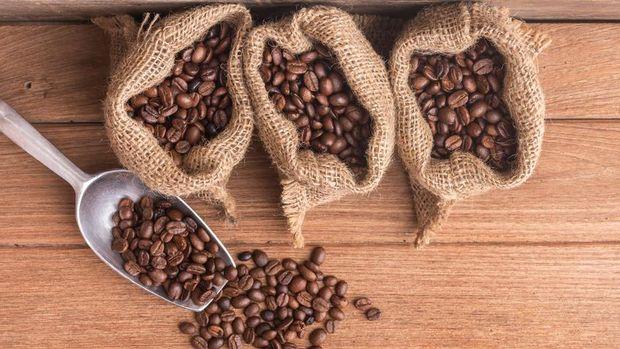 Perbedaan biji kopi arabika dan robusta.