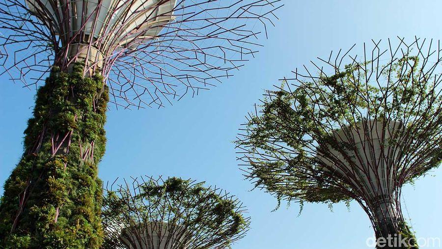 Inilah Gardens by The Bay, sebuah taman indoor dengan berbagai tanaman dengan konsep modern di Singapura (Randy/detikTravel)