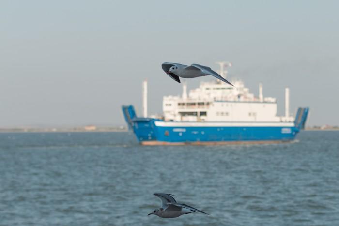 Ilustrasi kapal (Foto: Thinkstock)