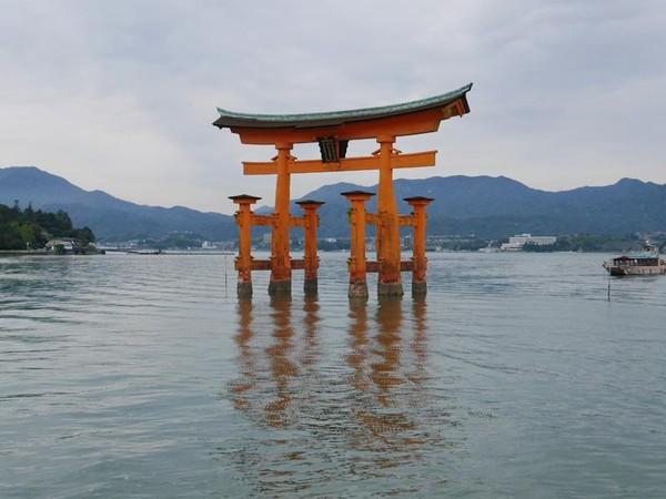 Di Miyajima, turis bisa melihat langsung gerbang kuil atau torii oranye yang ikonik beserta Kuil Itsukushima. Torii serta kuilnya akan tampak terapung ketika air laut pasang (Kurnia/detikTravel)