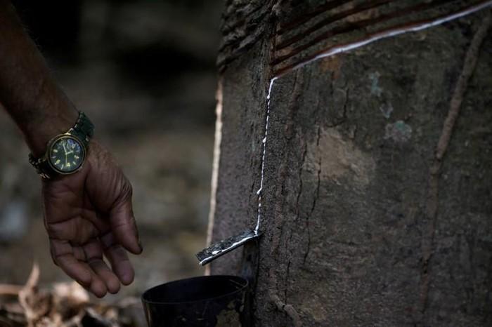 Selama lebih dari satu dekade, Barros dan rekan-rekannya sudah mengampanyekan maraknya penggundulan hutan di hutan Amazon. Penggundulan hutan dipicu oleh pembukaan lahan untuk peternakan, kebun kedelai dan pembalakan liar. (Foto: REUTERS/Ricardo Moraes)