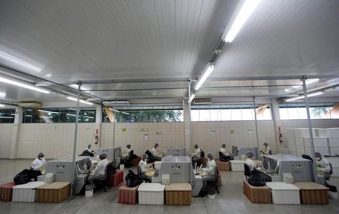 Pabrik kondom kami merupakan salah satu yang terbaik karena menggunakan bahan alami. Kami juga memiliki ratusan pekerja yang sekaligus menjadi penjaga hutan Amazon, tutur Raimundo Mendes de Barros, salah satu kepala tim pengumpul getah karet di pabrik Natex. (Foto: REUTERS/Ricardo Moraes)
