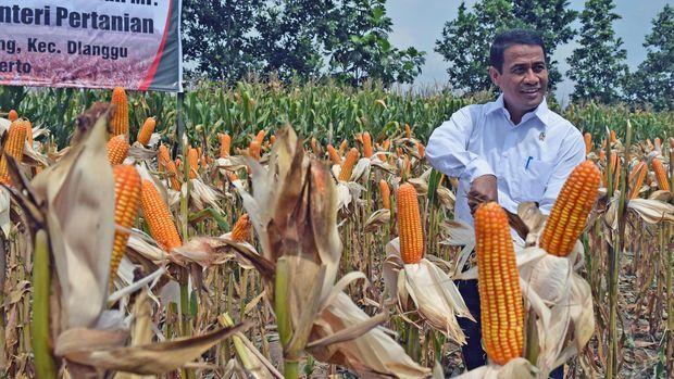 Menteri Pertanian Andi Amran Sulaiman memanen jagung BISI-18 saat panen raya jagung di lahan petani binaan PT BISI International Desa Pohkecik, Dlanggu, Mojokerto, Jawa Timur, 2016.