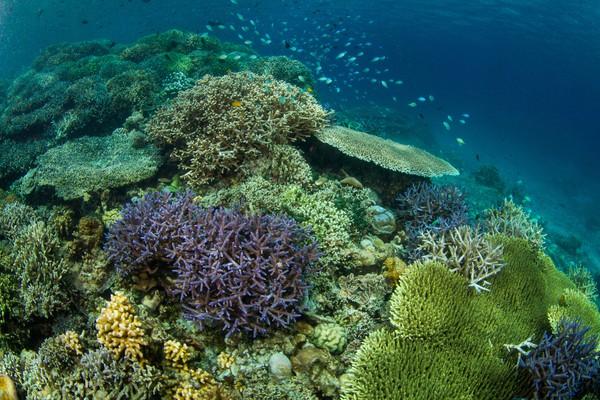 Keindahan laut Bunaken membuat rindu. Nanti saat pandemi reda, ayo berkunjung. (Thinkstock)