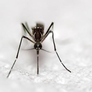 Punya Hobi Aneh, Wanita Ini Koleksi Puluhan Nyamuk Mati
