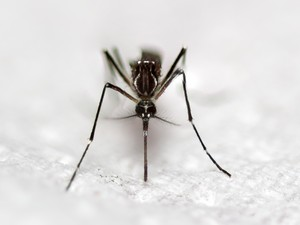 Cerita Lula Kamal Lindungi si Kecil dari Nyamuk di Mobil