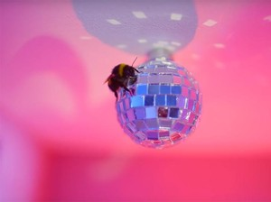 Pasangan Ini Jadi Kontroversi karena Pelihara 10 Ribu Lebah di Apartemen