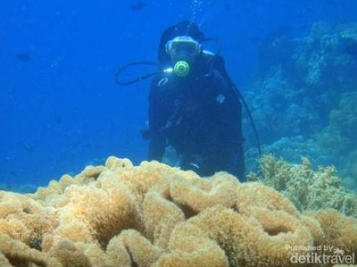 Surga Ada di Bawah Laut Indonesia
