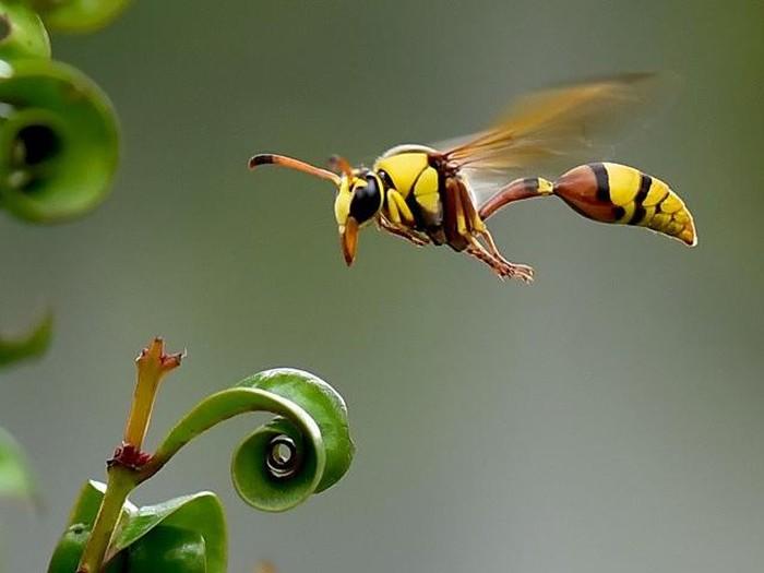 Ilustrasi serangga. Foto: Balox
