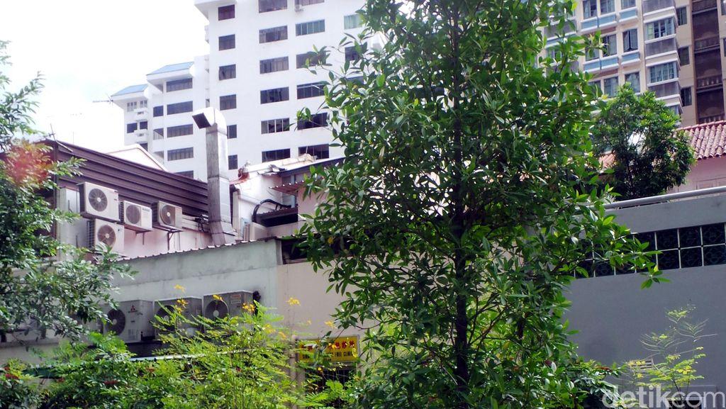 Pohon Kenangan Bapak Pendiri Singapura Ada di Taman Ini