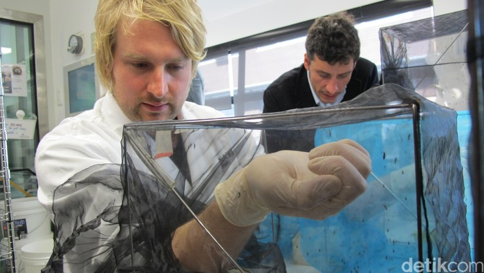 Laboratorium Nyamuk Wolbachia di Monash University (Foto: AN Uyung P/detikHealth)