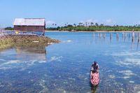 Kehidupan suku Bajo di Wakatobi (Bahtiar/detikTravel)