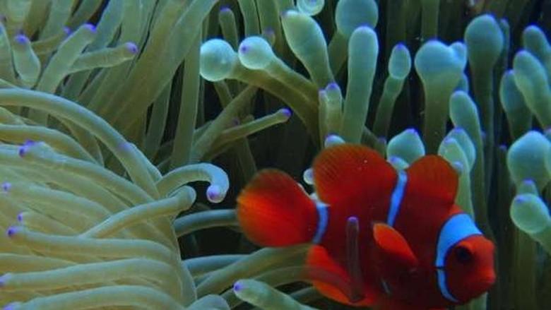 Foto: Pemandangan bawah laut Pulau Tomia (Dede/dTraveler)