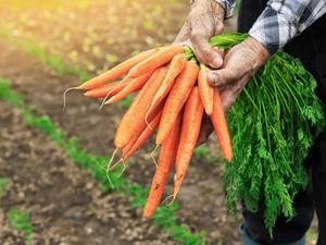 Warna Hijau dan Oranye Sayuran Tunjukkan Kandungan Nutrisinya