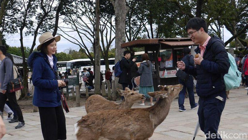 Waduh, Banyak Turis Digigit Rusa di Jepang