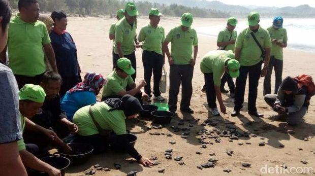 800 tukik atau anak penyu dilepas di Pantai Taman Pelepasan tukik dilakukan PT Pembangkit Jawa Bali (PJB) Unit Bisnis Jasa Operasi dan Maintence (UBJOM) Pacitan.