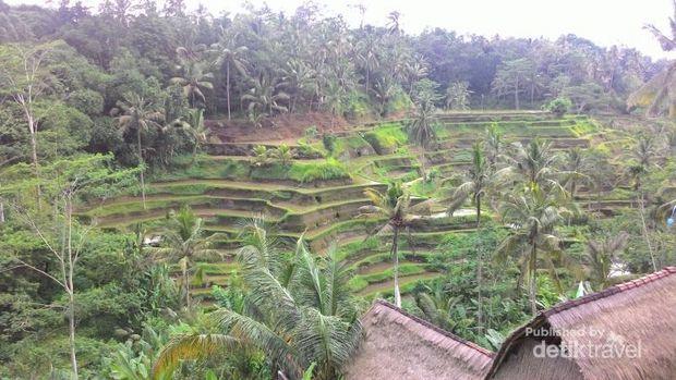 Ini Alasan Kenapa Bali Jadi Surga Para Digital Nomad