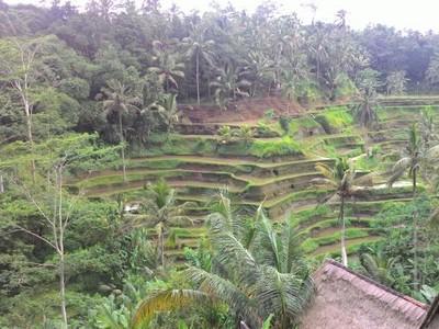 Masalah Turis Di-blacklist di Ubud, Ada Salah Paham 2 Pihak