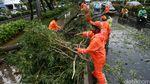 Pohon Tumbang di Jalan Rasuna Said