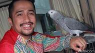 Istri Hamil Anak ke-5, Irfan Hakim Beri Cucu ke-41 untuk Orangtua