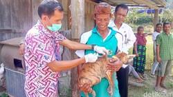 Jumlah kasus rabies di NTT mungkin hampir sama besarnya dengan di Bali, namun banyak yang tidak tertangani karena kurangnya fasilitas.