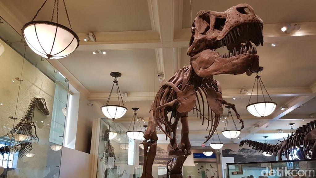 Bertemu T-Rex di Negeri Paman Sam