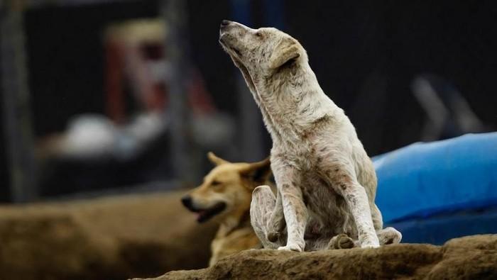 Tempat penampungan anjing di Kosta Rika