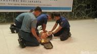 Penting! Inilah Teknik CPR Saat Pandemi COVID-19
