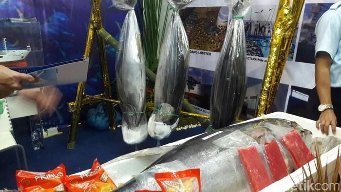 Ikan Tuna Seberat Orang Dewasa