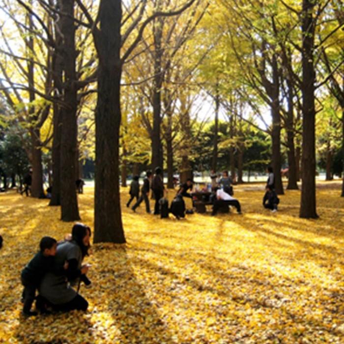 Saatnya Menikmati Indahnya Musim Gugur Di Jepang