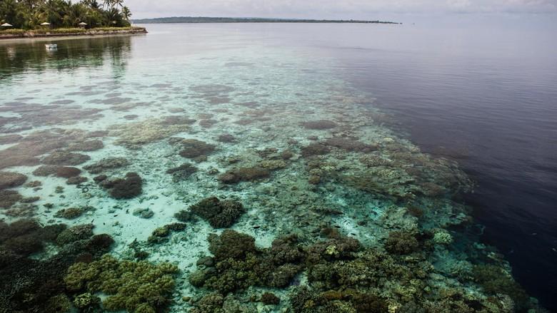Foto: Wakatobi, kecantikan di bagian kaki Pulau Sulawesi (Thinkstock)