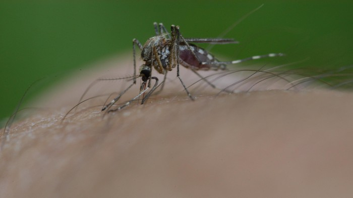 Menurut studi nyamuk tidak suka musik keras seperti dubstep dari Skrillex. (Foto ilustrasi: Thinkstock)