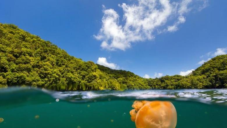 Ilustrasi Palau (Thinkstock)