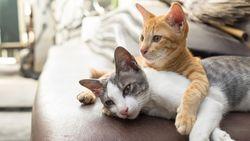 Aksi Pecinta Hewan Beri Makan Kucing-Anjing Terdampak COVID-19